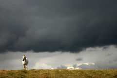 White horse in a field. Stock Image