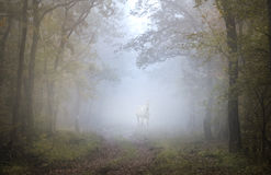 A white horse in the forest Stock Images