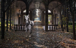 White horse - Forest dream Royalty Free Stock Photography