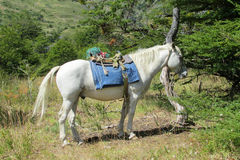 White horse in the forest Stock Image