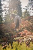 A white horse free in the woods on back-light sunrise. Color Photography low contrast smooth back-light of white horse in the woods stock photo