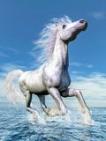 White horse freedom - 3D render. White horse running freely in the water by beautiful day - 3D render Stock Photo