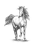 White horse freely running portrait Royalty Free Stock Photo