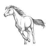 White horse freely running sketch portrait Stock Photo