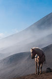 White Horse in front of mountains and blue sky Stock Photo
