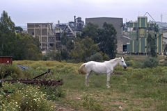 White horse in front of working cement plant Royalty Free Stock Image