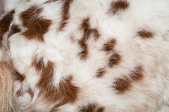 White horse fur texture for background Royalty Free Stock Photos
