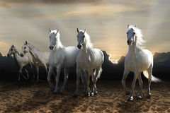 White horse galloping stock photography