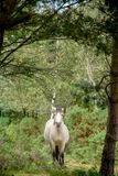 White horse galloping through forest royalty free stock photo