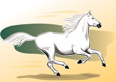 White horse galloping in the wind. Royalty Free Stock Photos