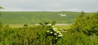 White Horse, Geoglyphs Royalty Free Stock Photo