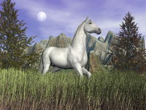 White horse in the grass - 3D render. Beautiful white horse standing in long grass in front of a mountain and next to fir trees by cloudy night Royalty Free Stock Images