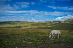 prairie of gannan. A white horse in the grasslands of gannan in the autumn Stock Photos