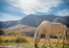 Horse grazing in mountains Stock Photo
