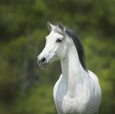 White horse on the green background Royalty Free Stock Photo