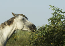 White horse is on a green field Stock Image