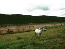 White Horse on Green Grass Field With Fence Stock Image