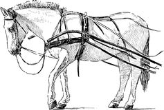 White horse in the harness Stock Photography