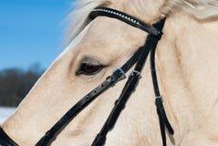 White horse head. Closeup shot of a horse head Royalty Free Stock Image
