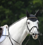 White horse head outdoor gelderland 2012 Stock Photography