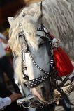 White horse head in red booble Royalty Free Stock Photos