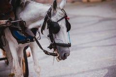 White Horse Stock Photography