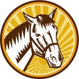 White Horse Head Sunburst Circle Woodcut Stock Photography