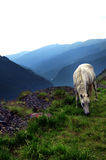 White horse in high mountains Stock Photo