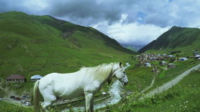 White horse on hill stock video footage