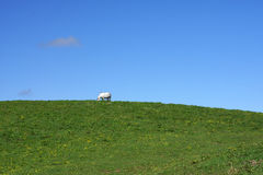 White Horse on a Hill Royalty Free Stock Image