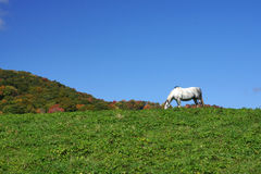 White Horse on a Hill Stock Photography