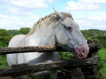 A white horse stock photography