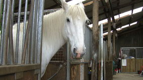 White horse in his stall stock video footage