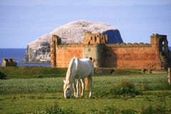 Free White Horse In A Scenic Background Royalty Free Stock Photo - 33550265