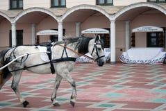 White horse. Stock Photos