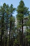 White Horse Lake Campgrounds, WIlliams, AZ Royalty Free Stock Images