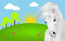 White horse with landscape Royalty Free Stock Photos