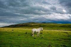 White horse with long mane in flower royalty free stock photos
