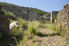 White horse looking at camera in a ghost town village Kayakoy ruins Royalty Free Stock Photos