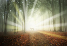 White horse in a magical forest with sun rays. And fog between trees stock photos