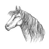 White horse with mane along neck sketch portrait Stock Image
