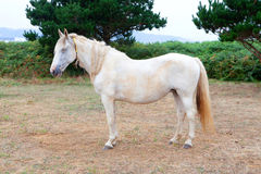 White horse in the meadow Stock Photos