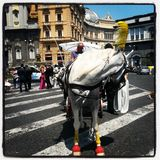 white horse in naples Stock Image