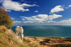White horse near the sea Royalty Free Stock Photography