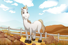 A white horse near the wooden fence Royalty Free Stock Photos