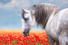Free White Horse On Meadow Royalty Free Stock Photography - 139450417