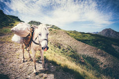 White Horse pack Animal Stock Photos