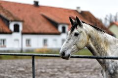 Horse on a paddock on a farm in eastern Poland Stock Images