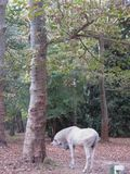 A white horse. In the park royalty free stock photography