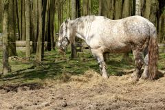 White horse on pasture. In Czech republic Royalty Free Stock Photos